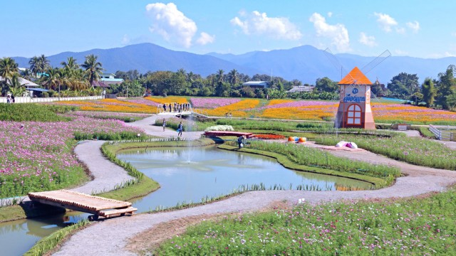 ฮอลแลนด์เมืองไทย ที่เมืองแกน