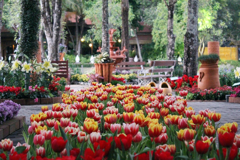 tulip-12