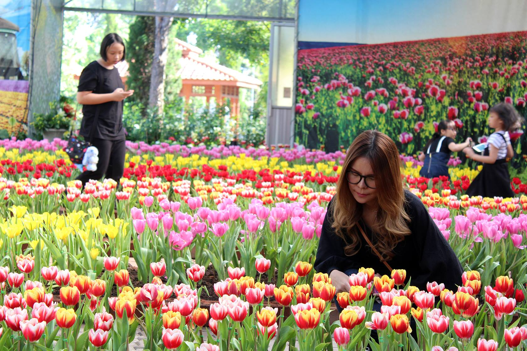 tulip-13