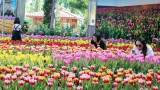 ชมดอกทิวลิป ที่ สวนราชพฤกษ์ฯ